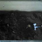 kompost po