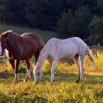 horses-2737942_1920
